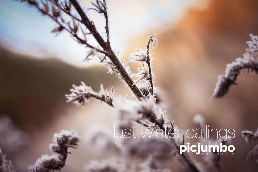 last-winter.png