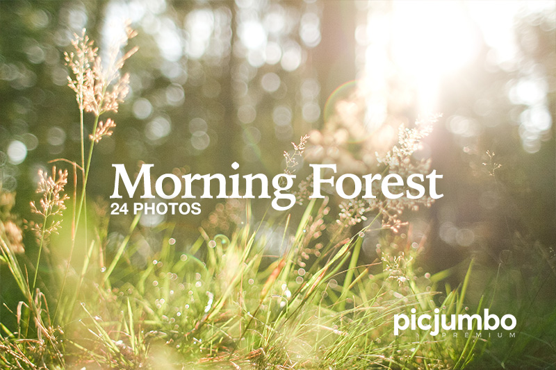 picjumbo-premium-morning-forest.jpg