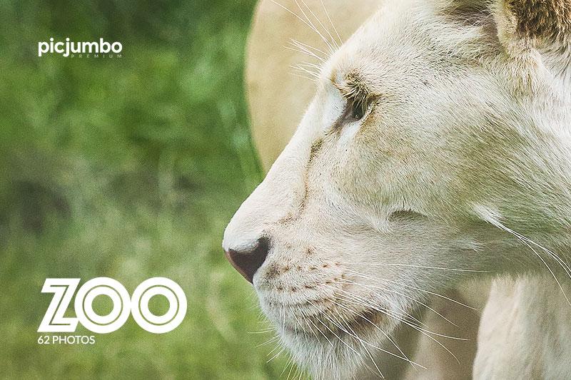 picjumbo premium zoo animals collection