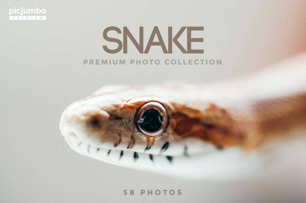 Snake — get it now in picjumbo PREMIUM!