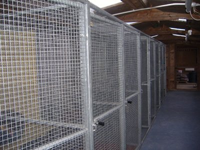 Inside the Cattery kennels