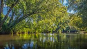 Chestatee river with trees surrounding, and reflecting in the water