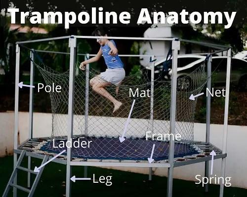 Trampoline Anatomy