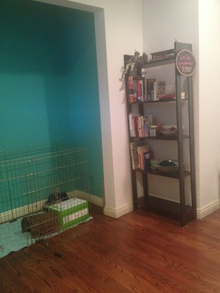 Our new bookshelf! Complete with all that remains of our books, and a few library books I've picked up. Bonus: our new gold rabbit cage for the most spoiled member of our family.