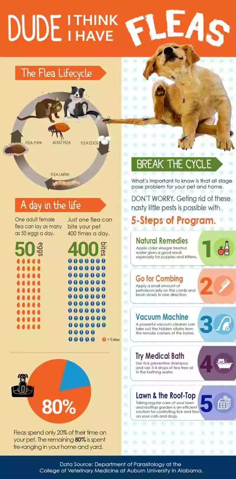 Kill Ticks And Fleas On Cats & Dogs