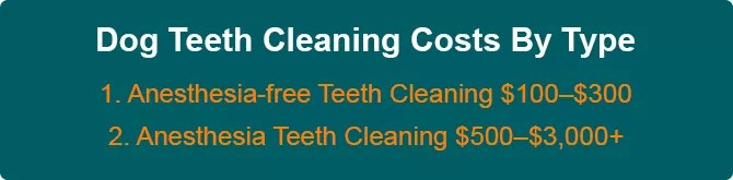 Dog Teeth Cleaning Costs