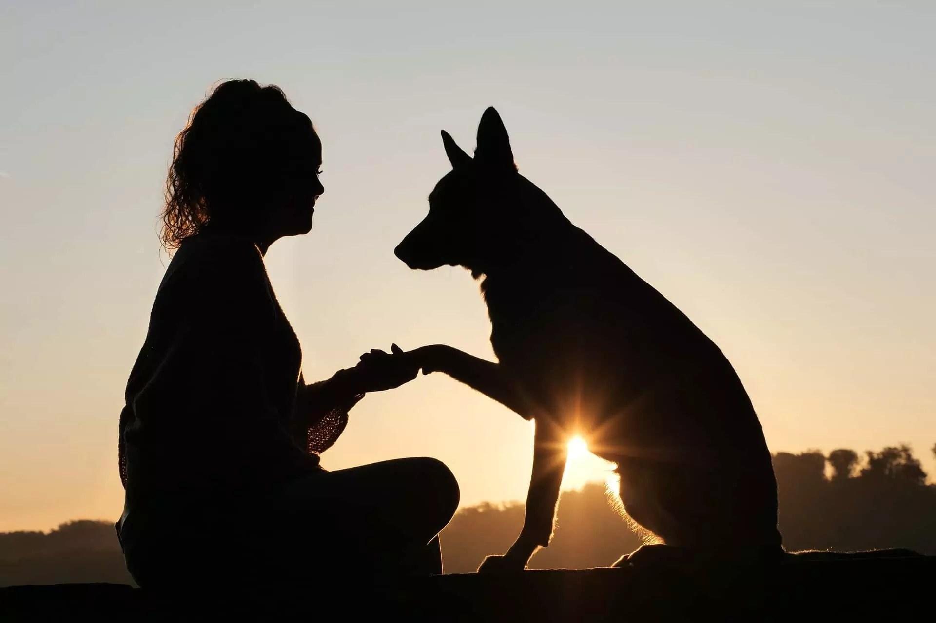 Companionship with furry pets