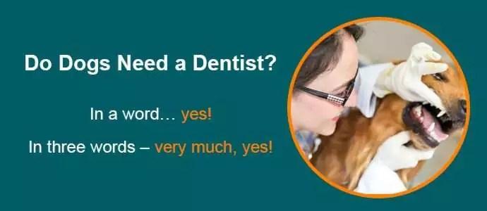 Pets Dental Care