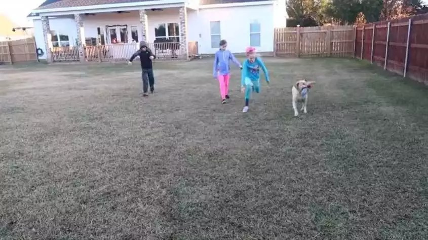 pets, petting, and playing