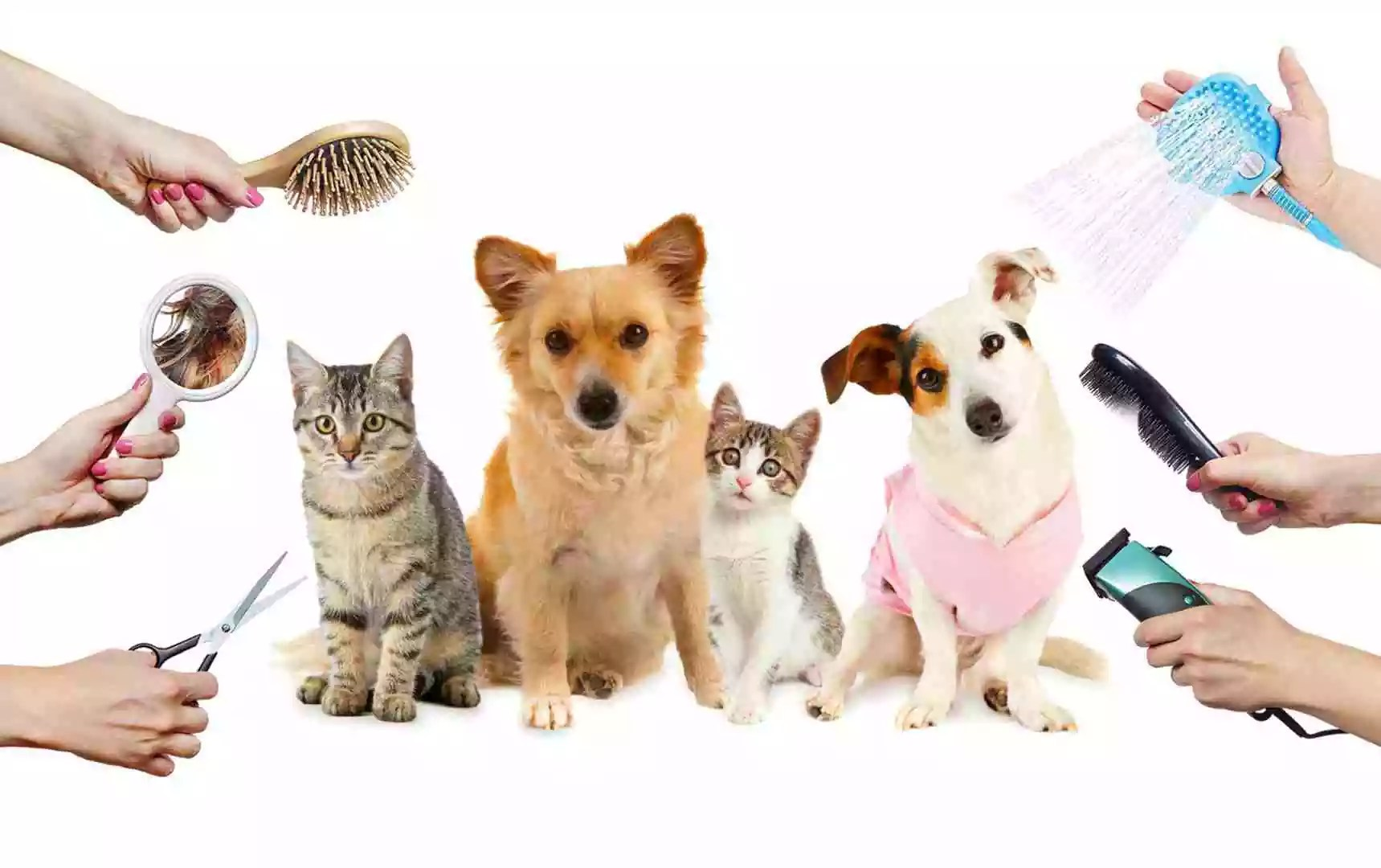 why you should groom your pet regularly