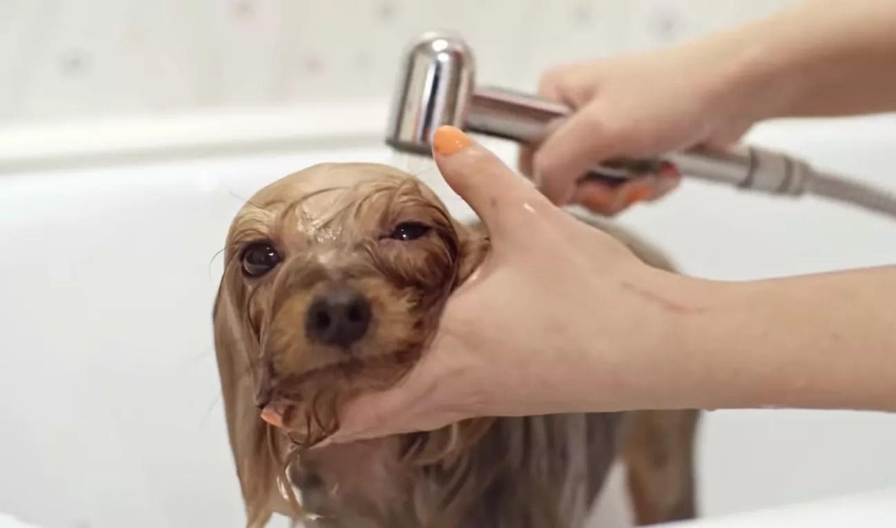 Bathe Your Dog