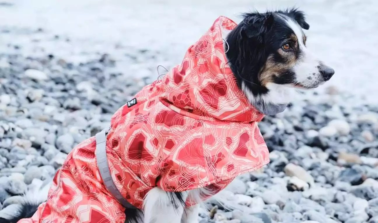 Keeping Your Pet Warm