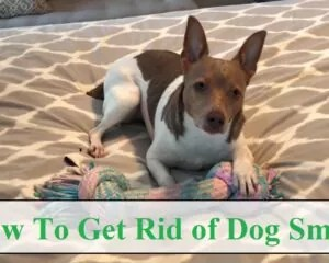 How to Get Rid of Dog Smell
