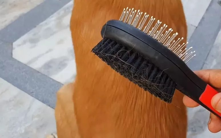 The right kind of brush
