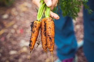 Manger bio aurait un impact positif sur la diminution du risque de surpoids ou d'obésité