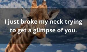more funny giraffe pick up lines