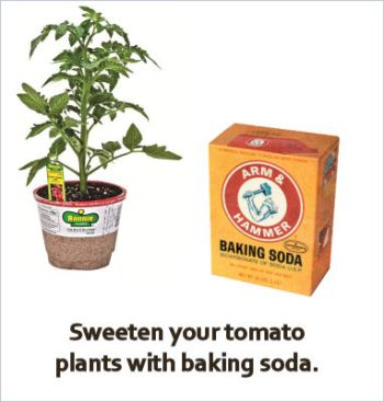 Baking soda garden hacks, baking soda hacks, popular pin, gardening, gardening hacks, baking soda, uses for baking soda, outdoor living, outdoor hacks.