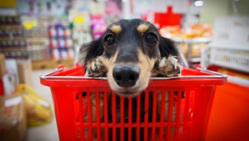 Close up of dog sitting in basket.