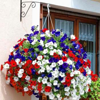 10 Hanging Baskets for the 4th of July| Hanging Baskets, Holiday Hanging Baskets, 4th of July Hanging Baskets, Outdoor Hanging Baskets, Container Gardening, DIY Outdoor Hanging Baskets, Summer, Summer Holiday, Popular Pin