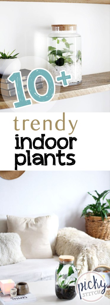 10+ Trendy Indoor Plants| Indoor Plants, Easy to Grow Indoor Plants, Simple Indoor Plants, Easy Care Indoor Plants, Low Maintenance Indoor Plants, Gardening, Indoor Gardening, Indoor Gardening TIps and Tricks, Popular Pin #IndoorGardening #Gardening #IndoorPlants