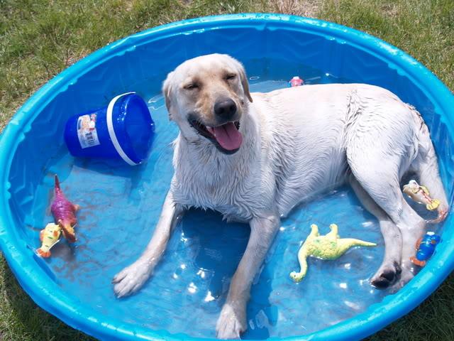 10 Dog Care Hacks That They'll LOVE Dog Care, Dog Care Hacks, Pet Care, Pet Care Hacks, Easy Pet Care, Pet Care TIps and Tricks #DogCare #PetCare #LifeHacks #Hacks