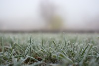 The frosted grass on Monday morning   Nature free images ...