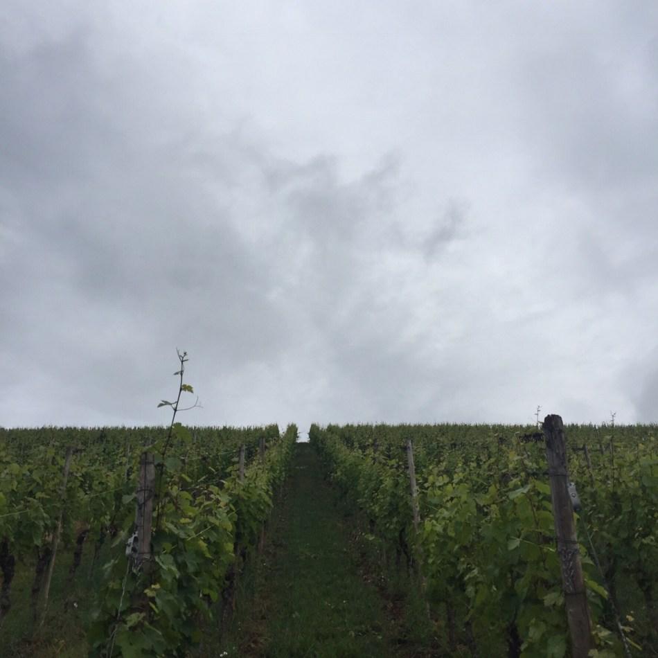 Domaines Vinsmoselle 6