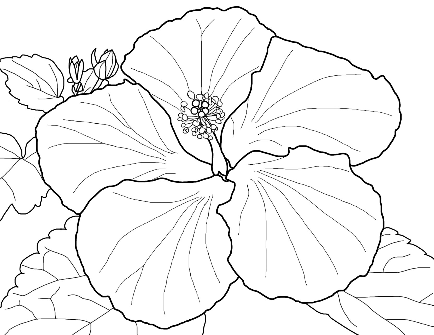 parts of a flower simple diagram power wheels 12v wiring beautiful red hibiscus colouring pages - picolour