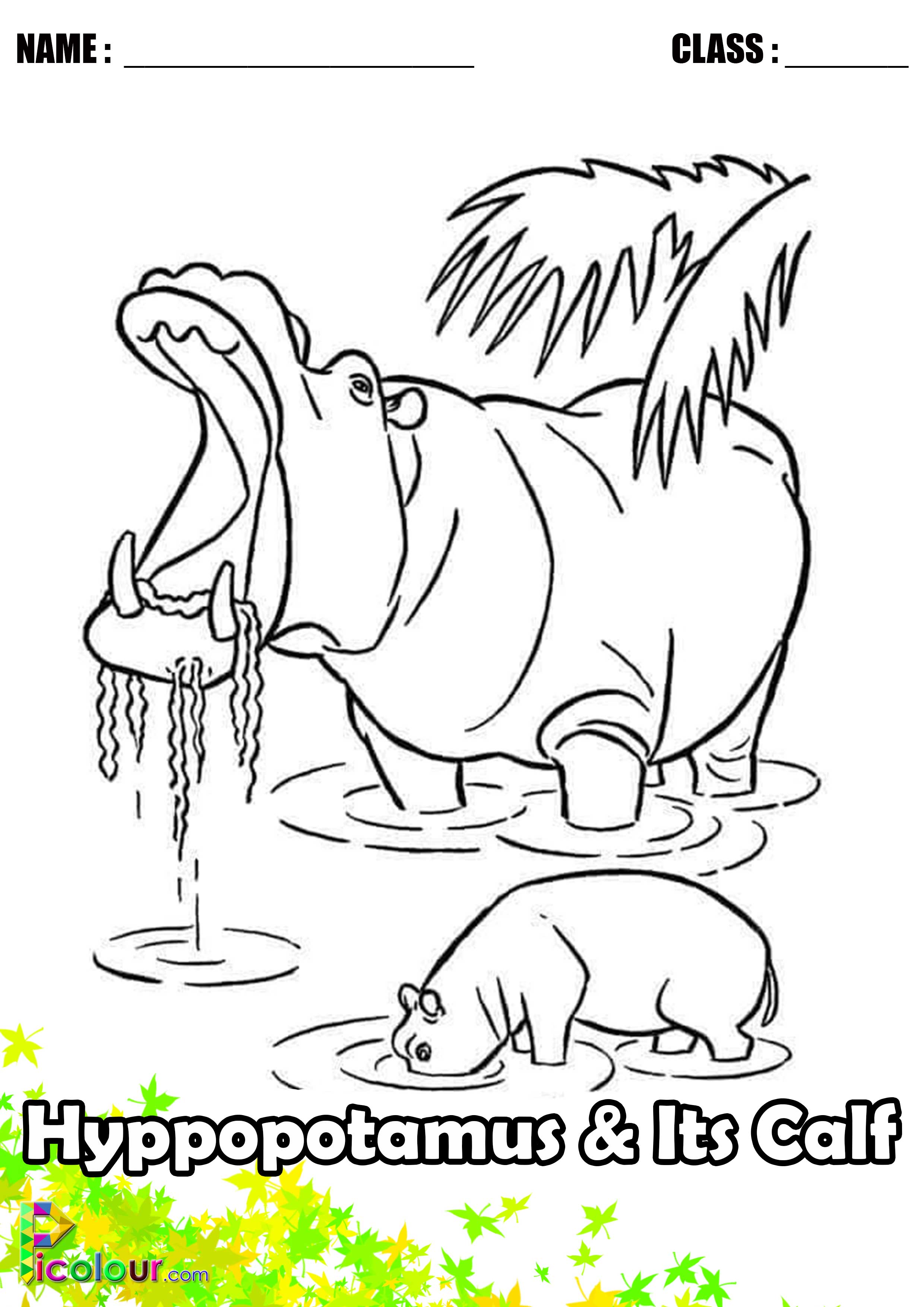 Calf Coloring Pages