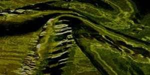 Iridescent Crush Moss