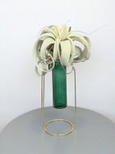 planta del aire en jarrón
