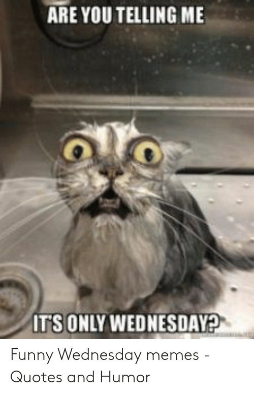 Funny Wednesday Memes : funny, wednesday, memes, Memes, Funny, Wednesday, Factory