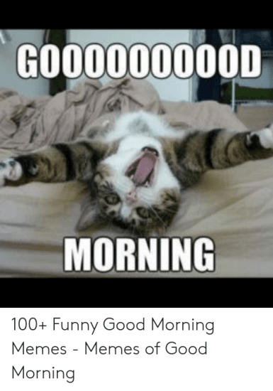 🐣 25+ Best Memes About Good Morning Meme for Her | Good Morning ...