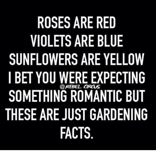 Roses Are Red Violets Are Blue Sunflowers Are Yellow I Bet You Were Expecting Something Romantic But These Are Just Gardening Facts Ircus Facts Meme On Awwmemes Com