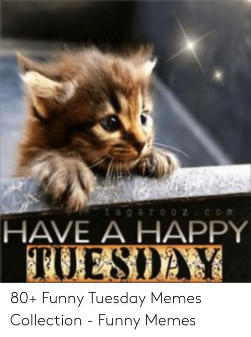 Happy Tuesday Funny Images : happy, tuesday, funny, images, Images, Happy, Tuesday, Funny