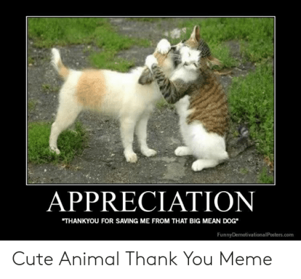 Thank You Meme Cute