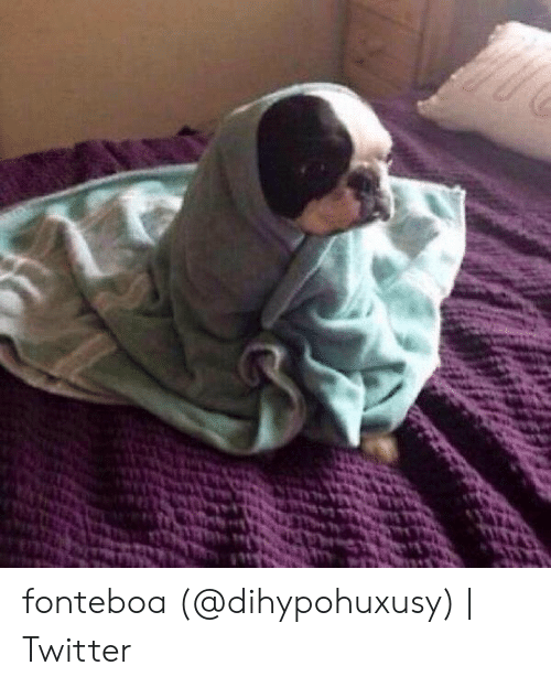 Dog Wrapped In Blanket Meme : wrapped, blanket, 🅱️, Memes, About, Wrapped