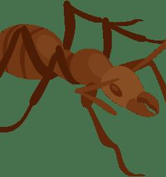 ant png clip art [ 8000 x 5335 Pixel ]