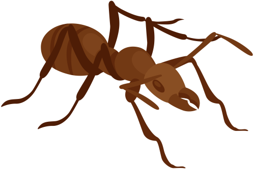 small resolution of ant png clip art