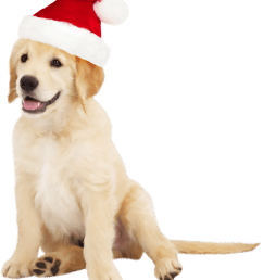 cute dog with santa hat png clipart [ 1331 x 1571 Pixel ]