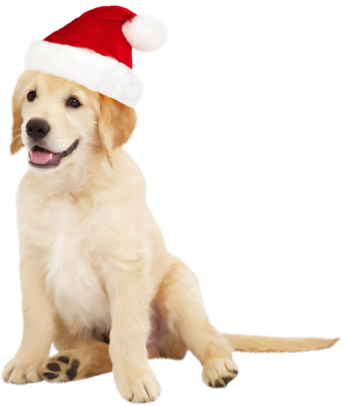 small resolution of cute dog with santa hat png clipart