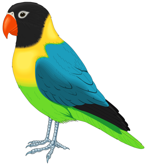 small resolution of multicolored bird png clipart
