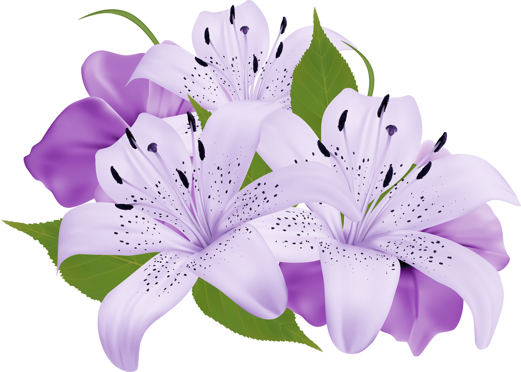 hight resolution of purple decorative flowers png clipart