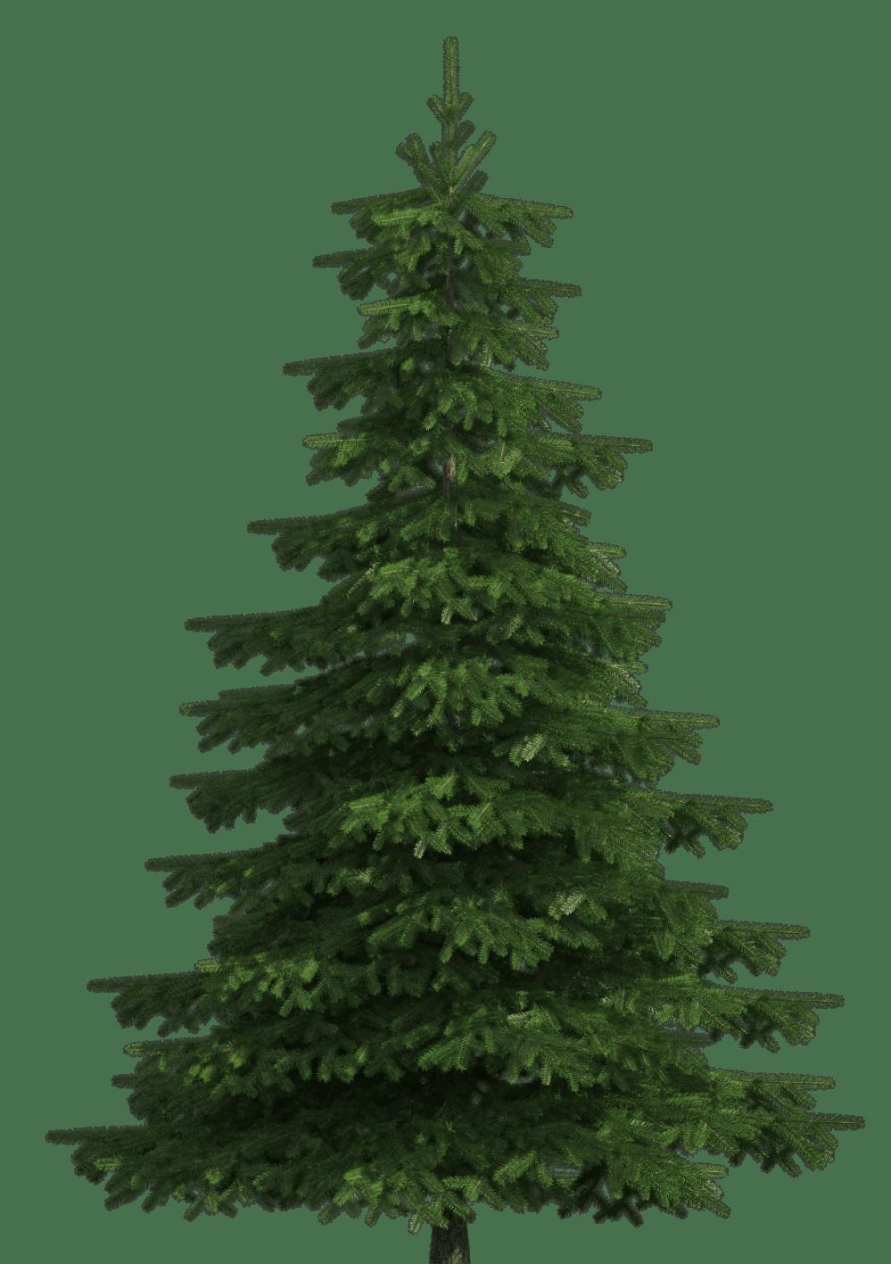 medium resolution of realistic pine tree png clip art