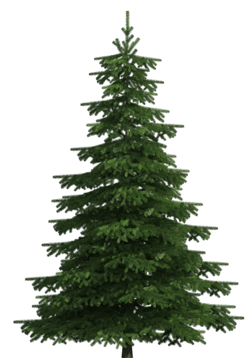 small resolution of realistic pine tree png clip art