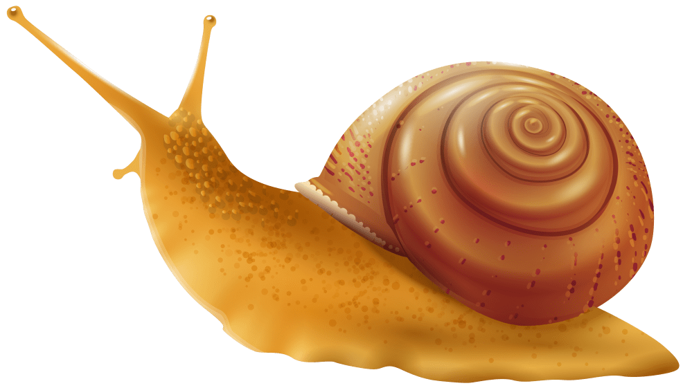 medium resolution of snail png clip art