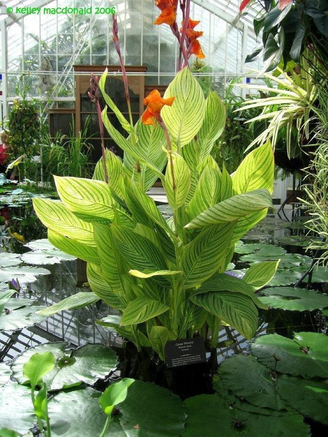 Pond Plants Canada