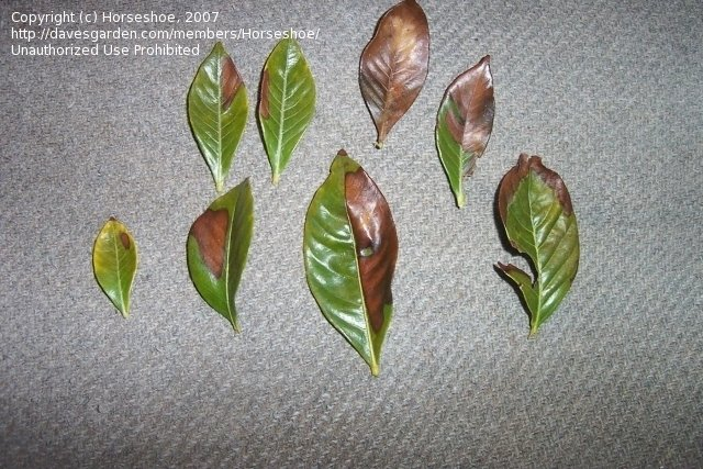 Dried Leaves Fertilizer