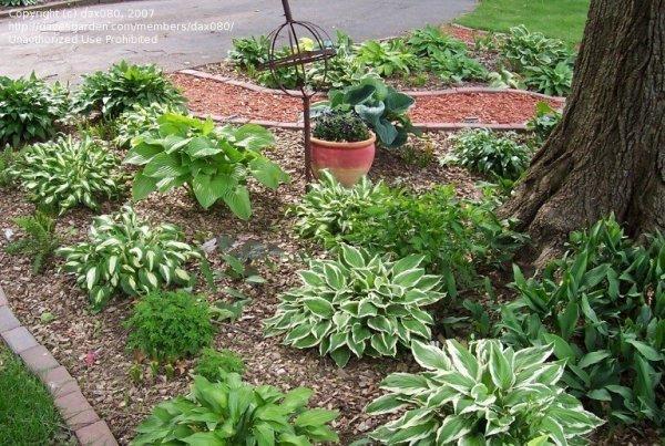 beginner gardening under