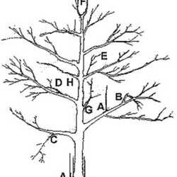 Apple Tree Pruning Diagram, Apple, Free Engine Image For